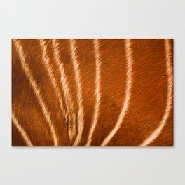 Safari Antilope Fur Texture Canvas Print