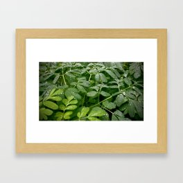 (#63) Misty Spring Leaves Framed Art Print