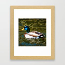 The Son Of A Duck Is A Floater Framed Art Print