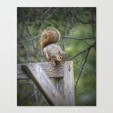 Fox Squirrel on a fence Canvas Print