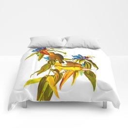 Connecticut Warbler Bird Comforters