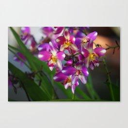 Mom's Magenta Grass Orchids Canvas Print