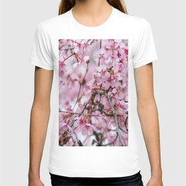 Cherry Blossom-1 T-shirt