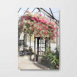 Bougainvillea in Bloom Metal Print