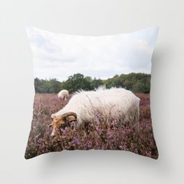Photo of grazing sheep on the purple heather near Utrecht, Holland/The Netherlands | Fine Art Colorful Travel Photography |  Throw Pillow