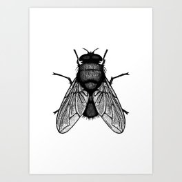 Harbinger Fly Art Print