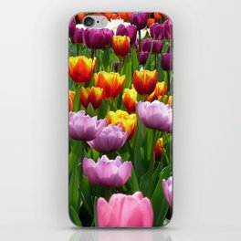 Spring Tulips in England iPhone Skin