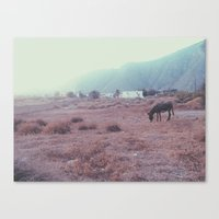 donkey Canvas Prints featuring Donkey by Rebecca Cote