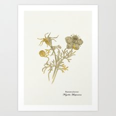 Nigella Hispanica, gold Art Print