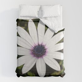 White African Daisy Comforters