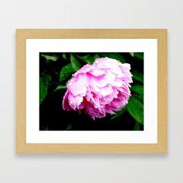 Dripping Pink Framed Art Print