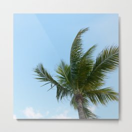 KEYWEST PALM TREE Metal Print