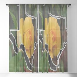 Yellow Rose of Texas with Texas Sheer Curtain