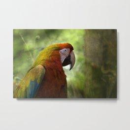 Red Macaw Metal Print