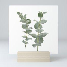 Eucalyptus Branches II Mini Art Print