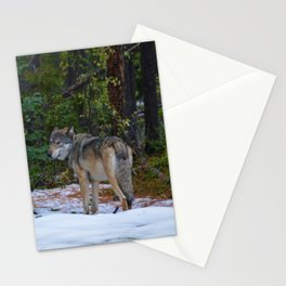 Wolf in Jasper National Park Stationery Cards