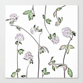 Trifolium Pratense Canvas Print