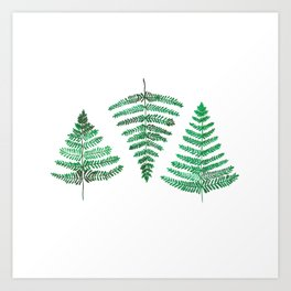 Fiordland Forest Ferns Art Print