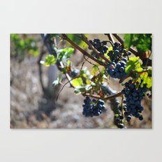 Grapes on the Vine. Canvas Print