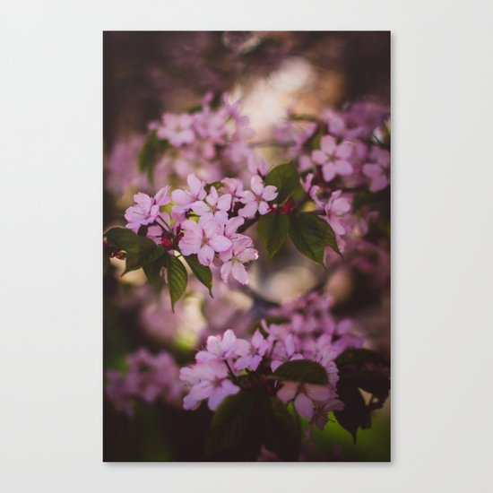 Beauty of Spring IV Canvas Print