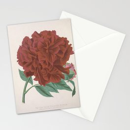 Flower Deep Blood coloured Moutan moutan officinalis atrosanguinea1 Stationery Cards