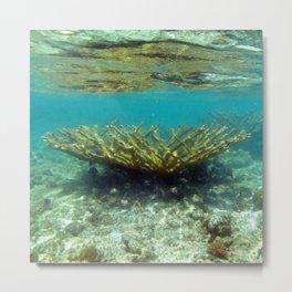 Watercolor Sealife, Elkhorn Coral 03, St John, USVI Metal Print