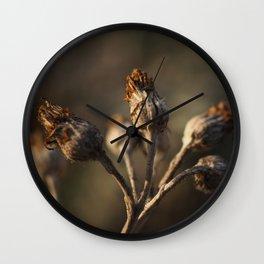 Silver Ragwort in Winter Wall Clock