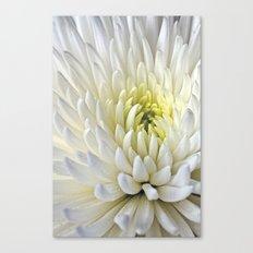 White Dahlia Flower Canvas Print