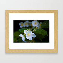 Wedding jasmine Framed Art Print