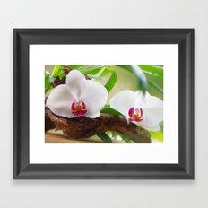 Orchid World Framed Art Print