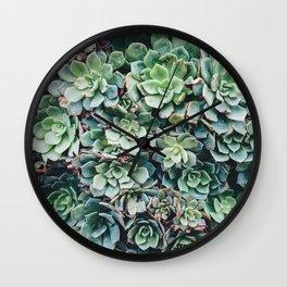 Succulent cactus aloe plants succulents nature photo Wall Clock