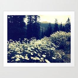 Daisy fields of September Art Print