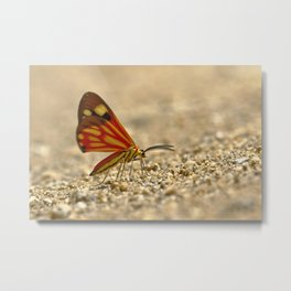 moth in the jungle Metal Print
