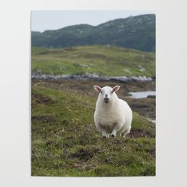 The prettiest sheep Poster