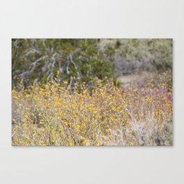Close Up of Wild Desert Sunflowers Coachella Valley Wildlife Preserve Canvas Print