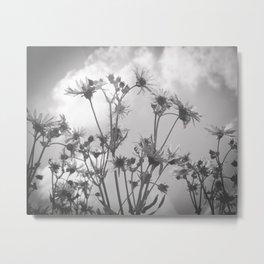 Daisy Day // Wildflowers Metal Print