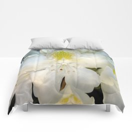White Beauty Comforters