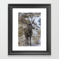 Twelve Point Stag in the Snow Framed Art Print