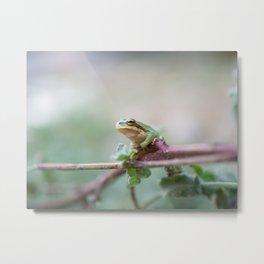 Macro shot of a tree frog in Dana national park | Travel photography Jordan Metal Print