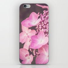 Botanical Pink Rose Purple Lace Cap Hydrangea Flower iPhone & iPod Skin