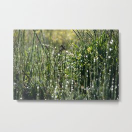 Dew on the Grass Metal Print