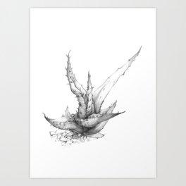 Aloe ferox Art Print