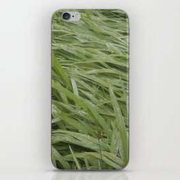 California Grass & Dew iPhone Skin