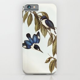MacLeays Halcyon (Halcyon MacLeayii) illustrated by Elizabeth Gould (1804-1841) for John Goulds (180 iPhone Case