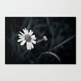 Lonesome Daisy Canvas Print