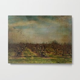 Apple Orchard Metal Print