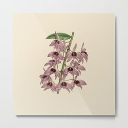 R. Warner & B.S. Williams - The Orchid Album - vol 01 - plate 042 Metal Print