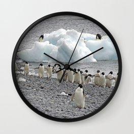 Adelie Penguins Wall Clock