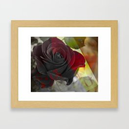 Queens 1 Framed Art Print