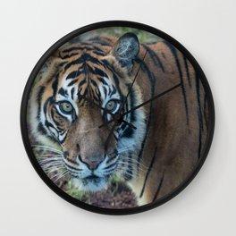 Tiger, Tiger Wall Clock